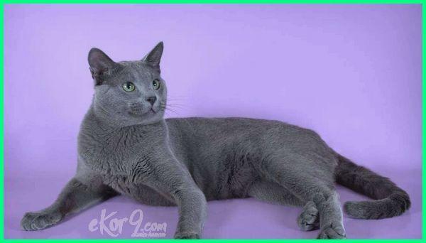kucing tercantik dan terimut, kucing tercantik dan terlucu, video kucing tercantik, warna kucing tercantik, wallpaper kucing tercantik, kucing tercantik wallpaper, gambar kucing yg tercantik, kucing yang tercantik di dunia, kucing yg tercantik di dunia