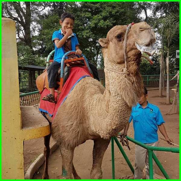 20 Hewan Yang Ada Di Kebun Binatang Bandung