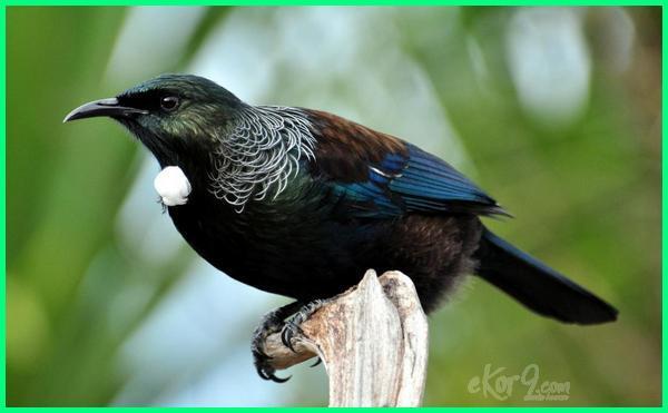 hewan asli endemik selandia baru