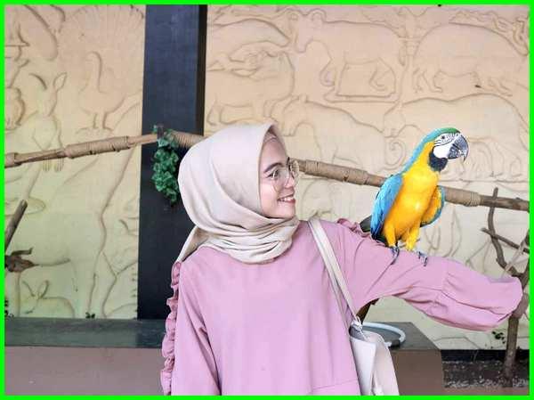 Burung Di Kebun Binatang Bandung Hewan Kebun Binatang Bandung