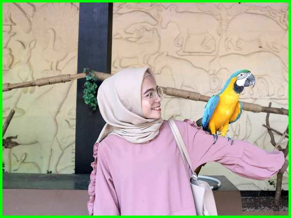 gambar burung di Kebun Binatang bandung, gambar hewan kebun binatang bandung