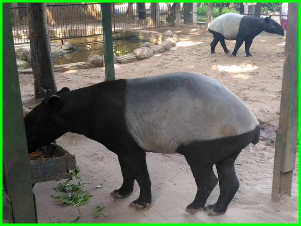 gambar hewan,kebun binatang, gambar binatang, kebun binatang bandung