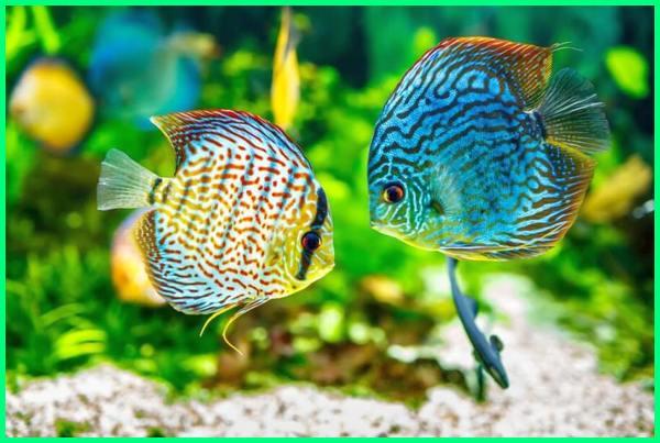 cara merawat ikan hias di akuarium kecil, perawatan aquarium air laut, cara merawat ikan hias perawatan aquascape, cara merawat aquarium, cara merawat aquarium air tawar, cara merawat aquarium agar tetap bersih, merawat aquascape
