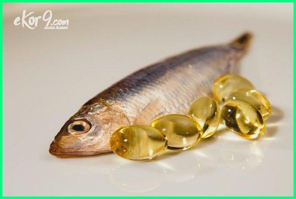 manfaat minyak ikan sea quill, manfaat minyak ikan bagi kulit, manfaat minyak ikan salmon untuk anak, manfaat minyak ikan salmon untuk wajah, manfaat minyak ikan bagi ibu hamil, manfaat minyak ikan untuk wajah berjerawat, manfaat minyak ikan omega 3 6 9, manfaat minyak ikan gabus untuk ibu hamil, manfaat minyak ikan buat ibu hamil, manfaat minyak ikan untuk bayi dibawah 1 tahun