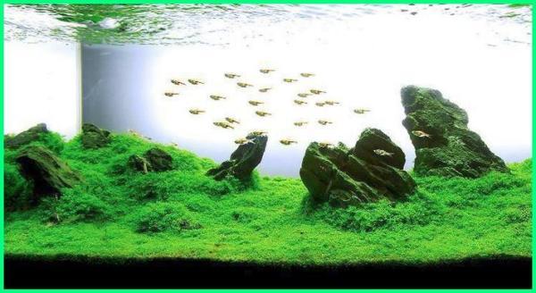 aquascape mini, aquascape air terjun, aquascape bonsai, aquascape sederhana, aquascape designs, , aquascape batu, aquascape design, aquascape waterfall, aquascape minimalis, aquascape moss, aquascape natural, aquascape bandung, aquascape pemula, aquascape tanpa co2, aquascape adalah, aquascape surabaya aquascape indonesia, aquascape malang
