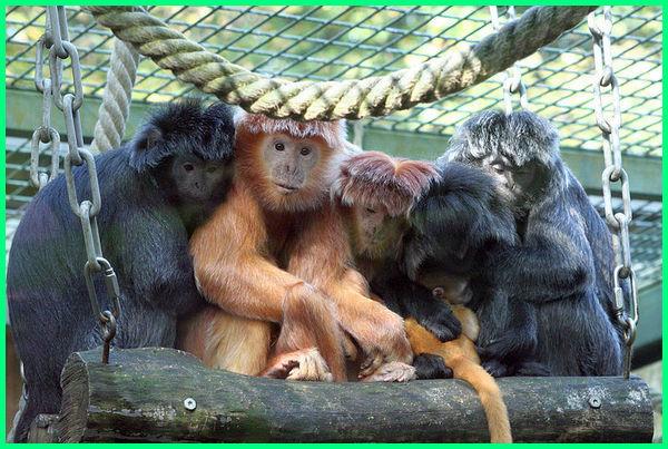 hewan pulau jawa yang sudah punah endemik terancam adalah langka di jenis gambar liar asli yg apa saja dan bali berasal dari ciri khas nama purba mitos terkenal hampir indonesia jasa pengiriman tumbuhan persebaran terdapat ada 10 4 dilindungi 5