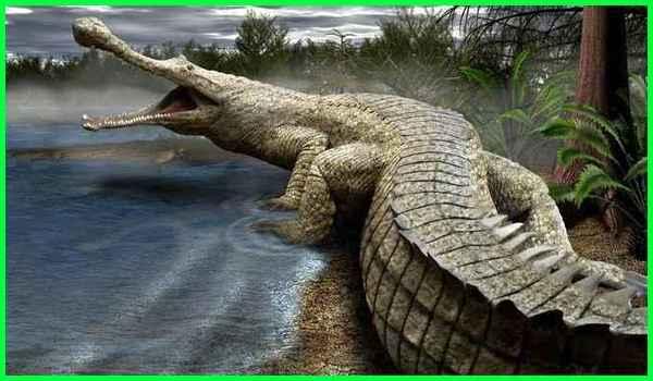 hewan terbesar dalam sejarah, gambar hewan terbesar sepanjang sejarah, hewan air terbesar sepanjang sejarah, binatang terbesar sepanjang sejarah bumi, hewan terbesar di bumi sepanjang sejarah, hewan terbesar di sepanjang sejarah