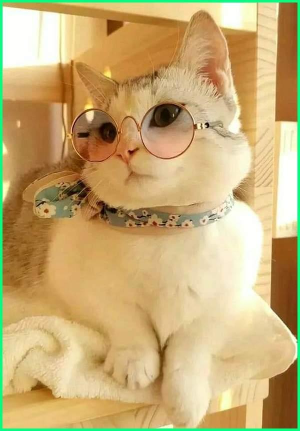 nama nama kucing betina, nama nama kucing betina yang bagus, nama nama kucing betina arab, nama nama kucing betina anggora, nama nama kucing betina korea, nama nama kucing betina yang unik, nama nama kucing betina dan artinya, nama nama kucing betina dalam islam, nama nama kucing betina jepang, nama nama kucing betina kembar