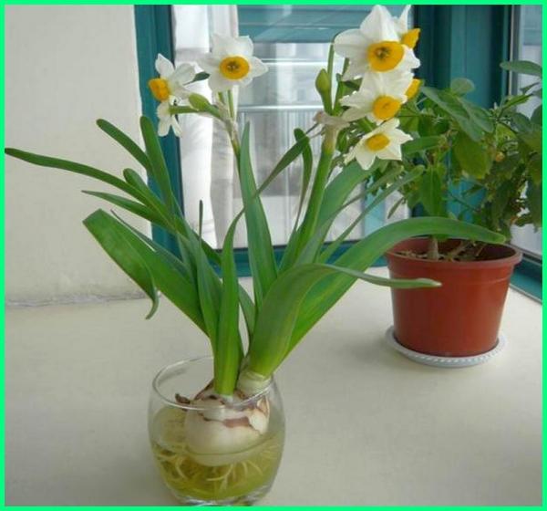 tanaman hias bermedia air, tanaman hias bisa hidup di air, tanaman hias yang bisa hidup di air, contoh tanaman hias yang hidup di air, tanaman hias air dalam botol, tanaman hias dalam air tawar tanaman hias hidup di air, gambar tanaman hias air, jenis tanaman hias yang bisa hidup di air, jenis tanaman hias yg bisa hidup di air