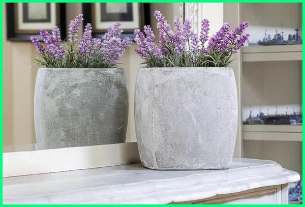 tanaman bunga pengusir nyamuk, tanaman bunga untuk mengusir nyamuk, tanaman bunga yang mengusir nyamuk, jenis tanaman bunga pengusir nyamuk, tanaman bunga yang dapat mengusir nyamuk