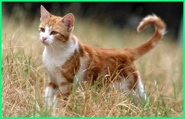 nama kucing jantan lucu, nama kucing jantan aneh, nama kucing anggora jantan dan artinya, nama kucing jantan beserta artinya, nama kucing jantan islam dan artinya, nama kucing jantan berdasarkan warna