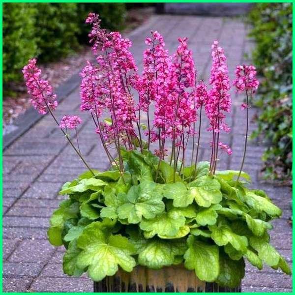 72+ Gambar Bunga Hias Paling Mekar