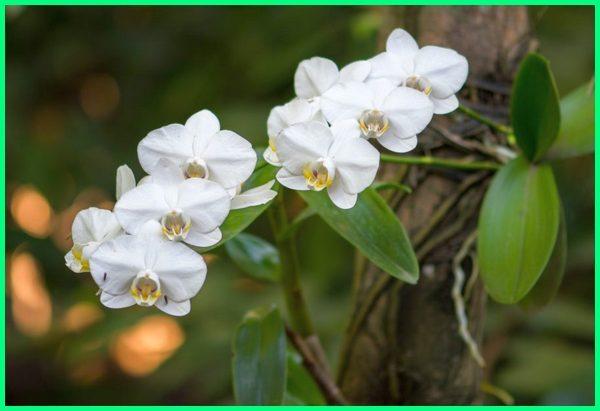 tanaman anggrek liar, flora asli indonesia, indonesia flora and fauna, flora fauna asli indonesia, contoh flora indonesia, contoh flora indonesia bagian barat dan timur, flora de indonesia, flora di indonesia timur, flora en indonesia, gambar flora indonesia