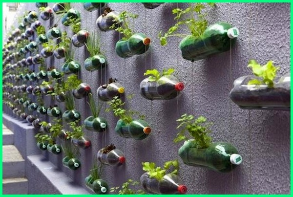 vertical garden sayuran botol bekas, vertical garden from plastic bottles, vertical garden for vegetables