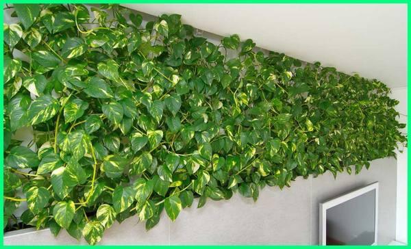 gambar tanaman vertical garden, cara menanam tanaman vertical garden, tanaman vertical garden outdoor, tanaman vertical garden indoor, tanaman buat vertical garden, contoh tanaman vertical garden, tanaman cocok vertical garden