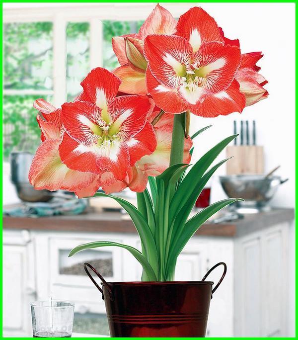 nama bunga dan artinya dalam bahasa inggris, lambang bunga dan artinya, nama bunga indonesia dan artinya, nama bunga indah dan artinya, bunga yang artinya kebahagiaan, bunga yang artinya kekasih, bunga lengkap artinya, nama dari bunga dan artinya