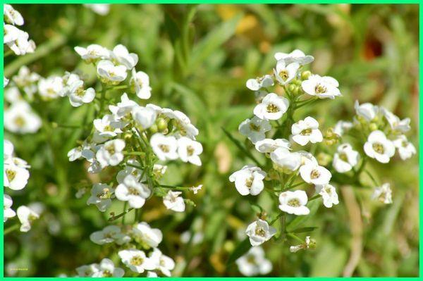 bunga paling harum di indonesia, bunga paling harum dan indah, bunga paling harum sedunia, bunga paling wangi di malaysia, bunga yang paling harum baunya