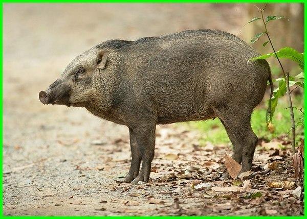 10 hewan khas singapura, gambar hewan khas singapura, binatang langka singapura, binatang nya singapura hari ini, hewan nasional negara singapura, hewan di negara singapura