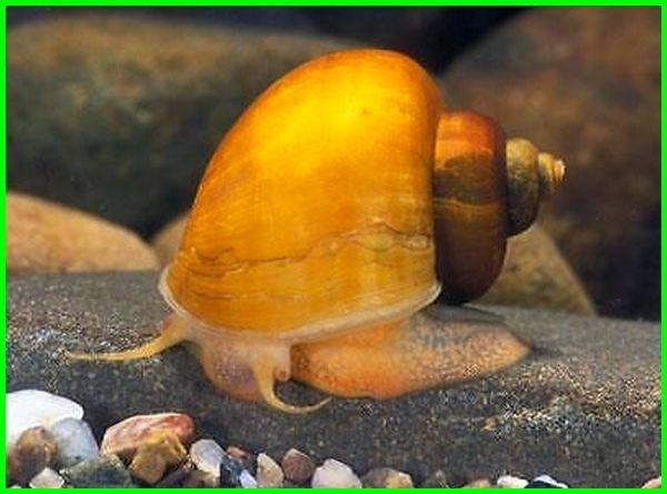 hewan di akuarium selain ikan, gambar hewan di akuarium, hewan yang di akuarium, hewan dipelihara di akuarium, hewan akuarium selain ikan