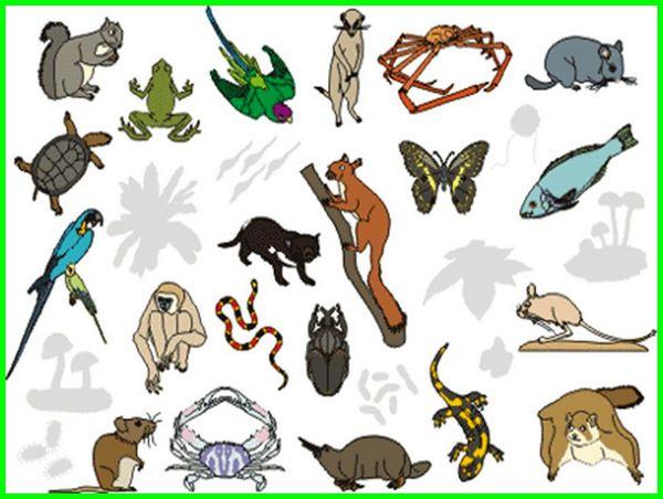 contoh kelas pada hewan, pembagian kelas pada hewan, kelas kelas pada hewan, macam macam kelas pada hewan, nama nama kelas pada hewan, nama kelas hewan, kelas contoh hewan, kelas dalam hewan, jenis kelas hewan, kelas kelas hewan, kelompok kelas hewan