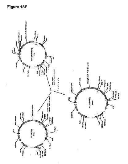 再生資源に由来するイソプレンの重合体