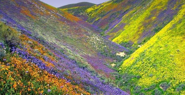 Valley Of Flowers (Courtesy: Internet)