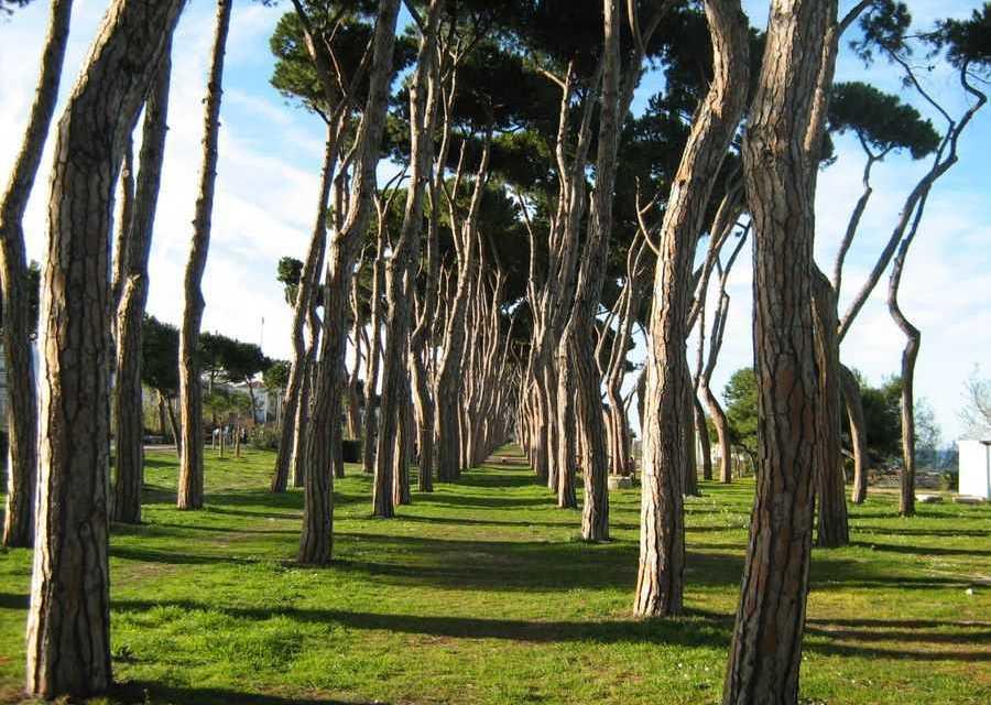 Censito patrimonio verde di Pineto: circa 4mila alberi caratterizzano il territorio