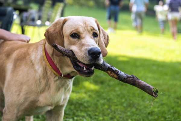 Alba Adriatica, niente cani nei parchi pubblici: multe per i proprietari fino a 500 euro