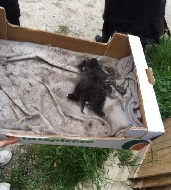 FOTO e VIDEO   Colonia felina Ex Manicomio, sopralluogo del Rettore con il Meta: trovato un gatto morto, salvati altri 5 cuccioli