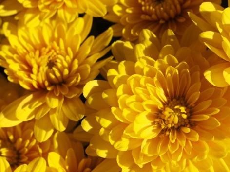 新年の挨拶の場を楽しく過ごすための色彩メソッド~コミュニケーション力を高める黄色の魔法~
