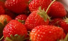 イチゴの謎~私たち、わかっているようで何もわかってなかった!~