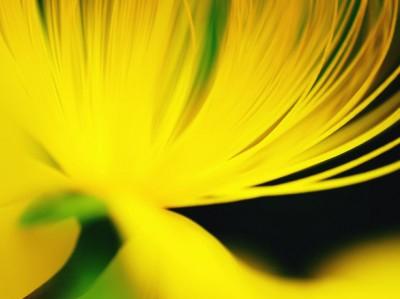 まばゆい光があなたを照らす!~レモンの力で幸せを呼び寄せる~