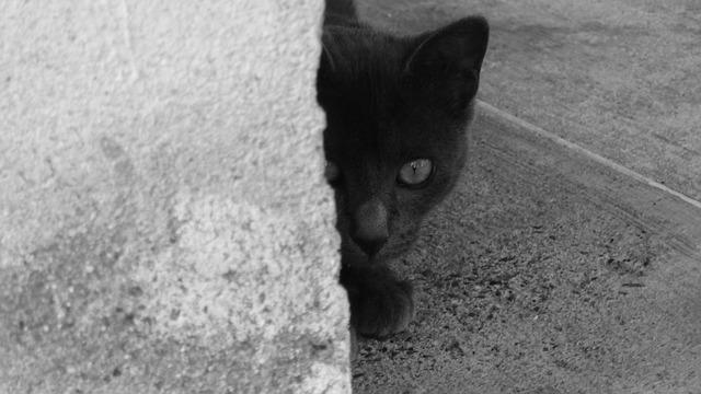 黒猫がもたらすものは、不幸、それとも幸福?