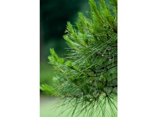 炭酸×発酵 健康のトレンドと自然のパワーが詰まった天然炭酸水を作ろう!