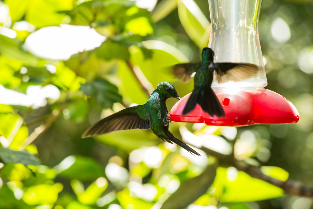 久慈悟子が教えるアニマルエッセンスPart.20 〜鳥類最小、ハミングバードのエッセンス〜