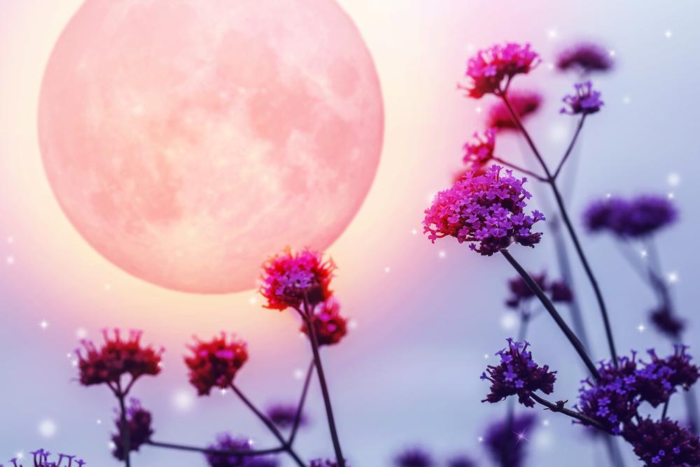 【獅子座の満月は11日の9:34です】<br>〜『達成のエネルギー』の恩恵を受けて、どういう願い事も引き寄せ上手になりましょう!〜