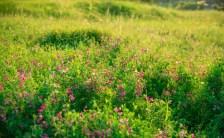 植物は地球からの贈り物<br>〜「地球からの贈り物 メディカルアロマセラピー講座」がスタートします〜