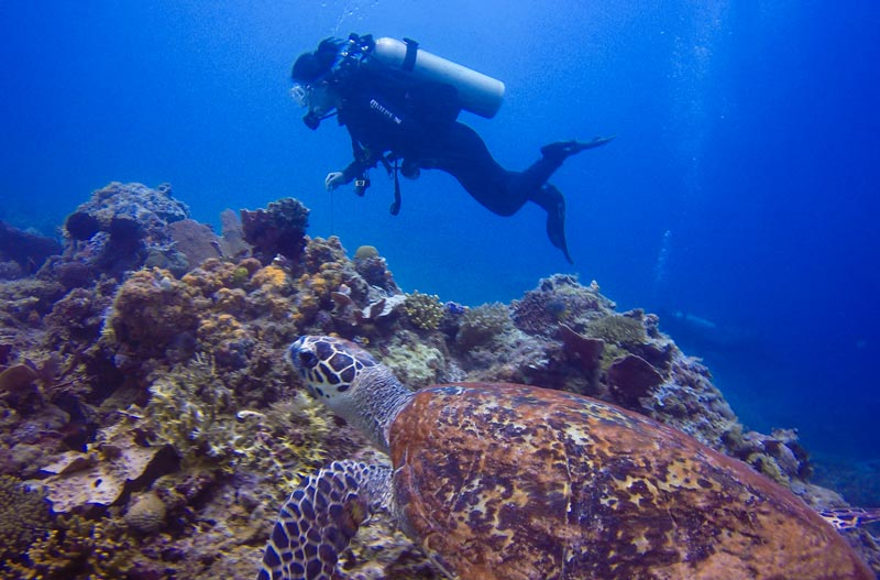 Hawksbill turtle in El Nido and a PADI Open Water student