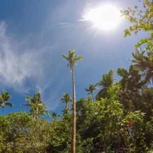 The cononut trees of Snake Island
