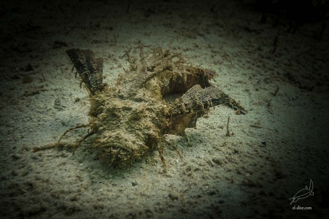 Spiny scorpion fish in Paradise beach