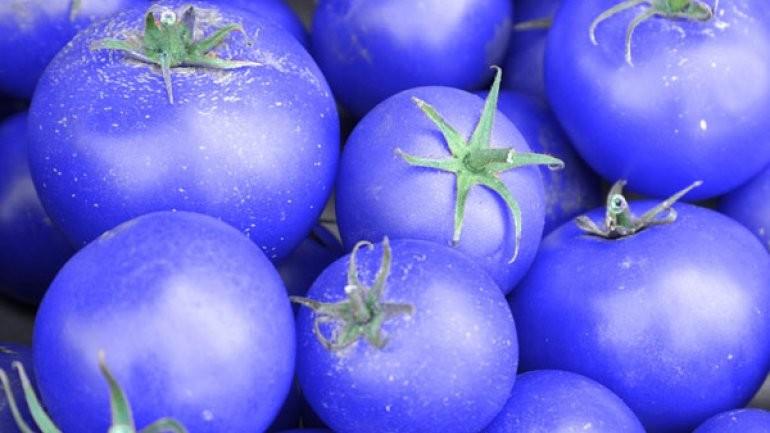 Vacunas a partir de tomates azules