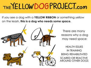 yellowdogproject2