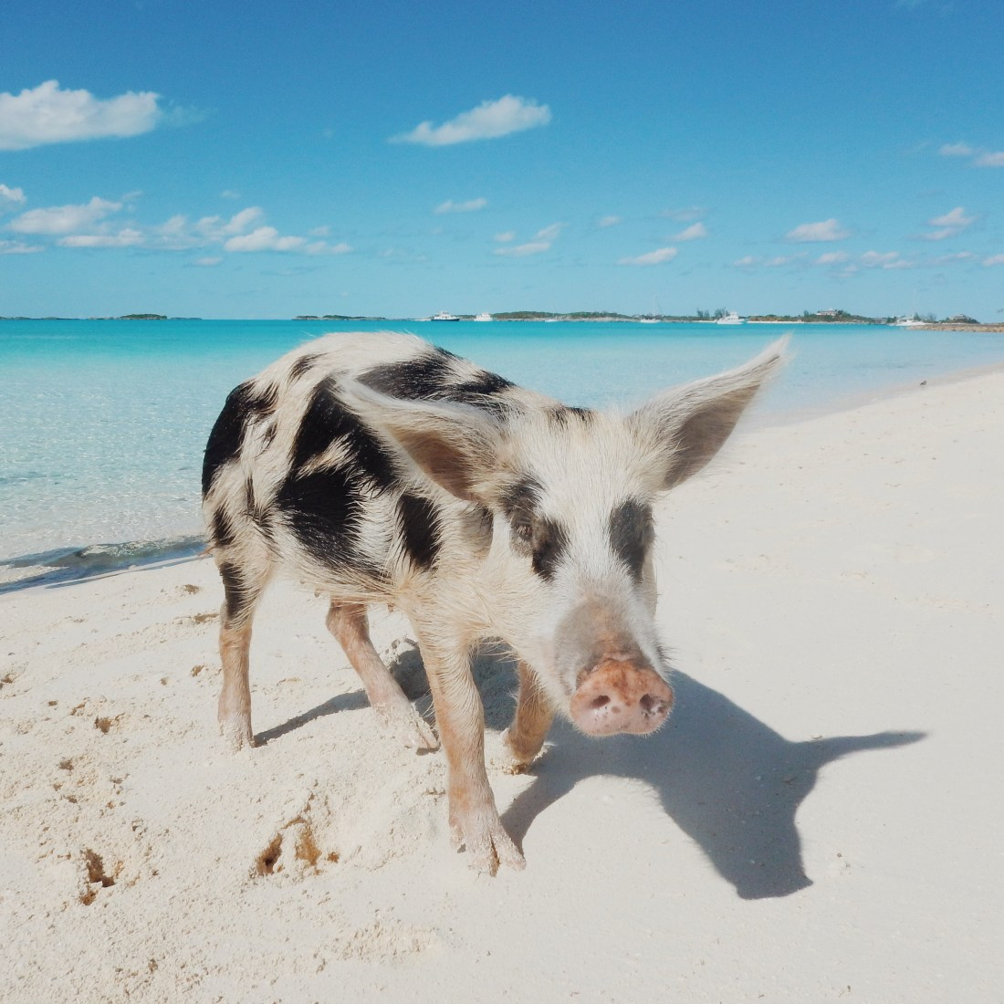 Traveling To The Exumas, Bahamas (& Why It's Our Favorite)