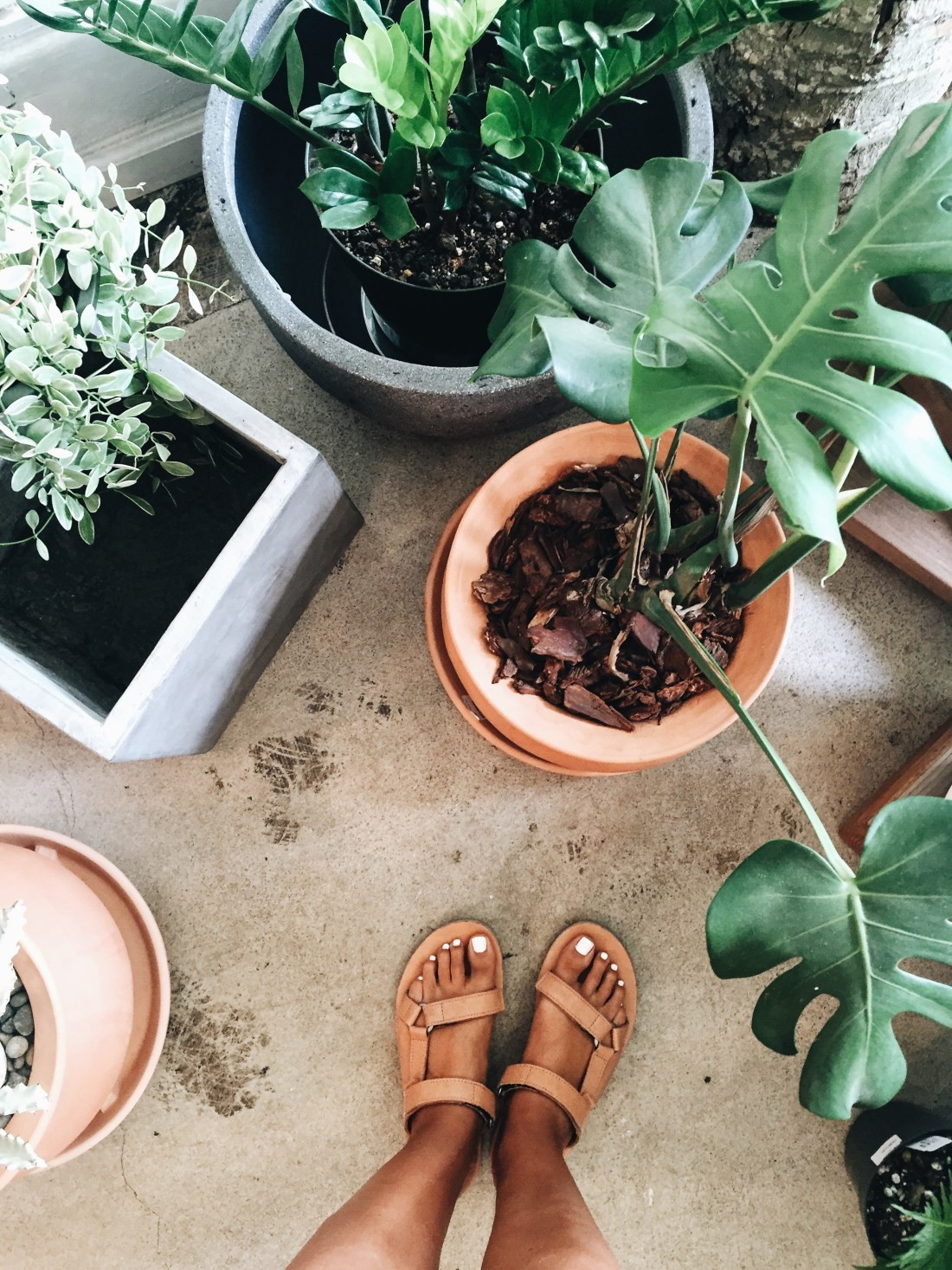 Paiko Plant Store in Honolulu | Arvo Coffee | Travel Guide To Oahu, Hawaii | Best Coffee Shops on Oahu | Coffee In Hawaii via @elanaloo + elanaloo.com