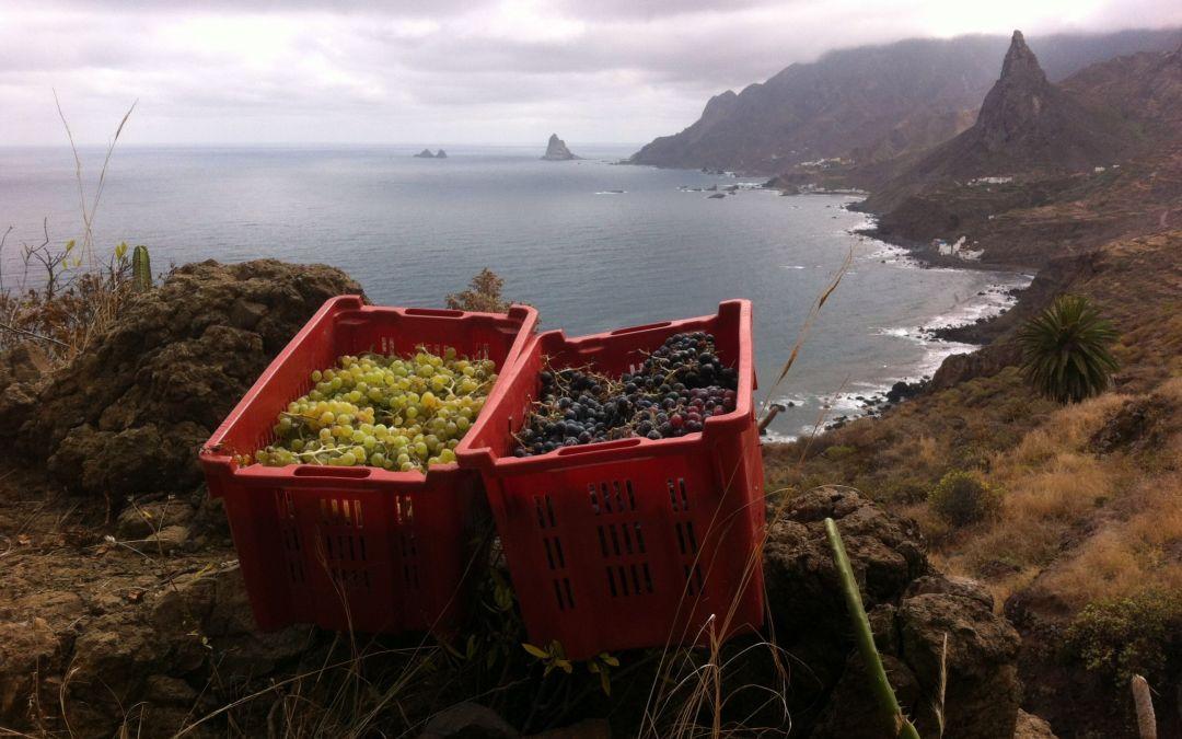 Proyecto Envínate: Vinos de autor, de terruño,… de paisaje.