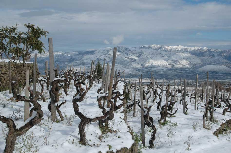 Vinos del Etna: el segundo vértice del triángulo volcánico vinícola