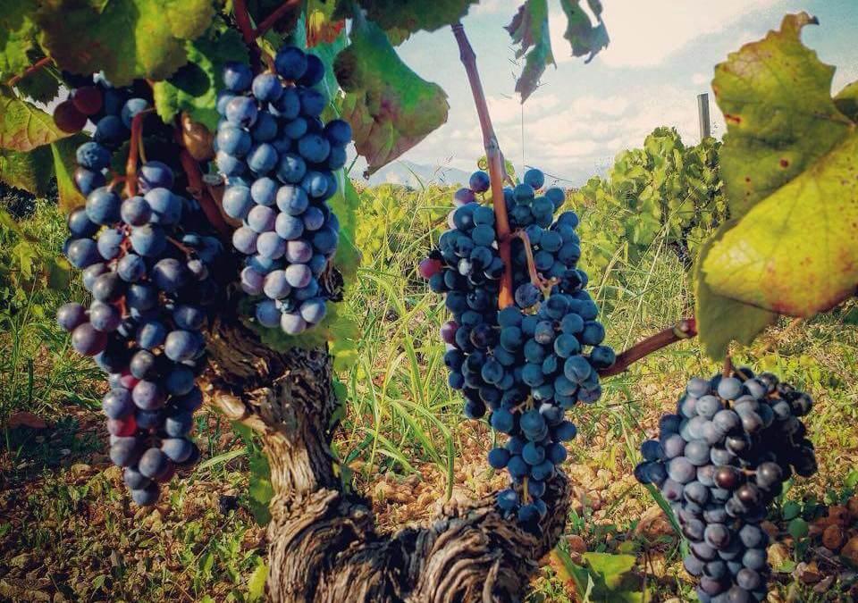 Cata de vinos de Mallorca. ¡Tanto por descubrir y disfrutar!