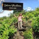 Vinos de copa en boca: Portela do Vento 2016 de Daterra Viticultores