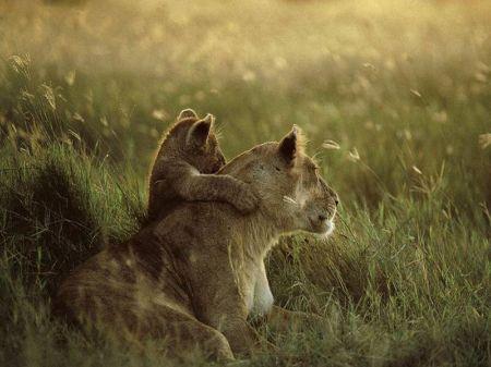 leon - Mamás-animales. Ellas sí que saben