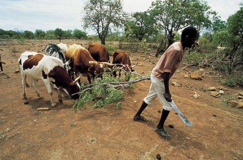 Países ricos y multinacionales acaparan tierras en naciones hambrientas